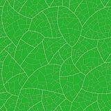 Blad (naadloos vectorbehang) Stock Foto's