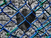 Blad och färgrikt staket royaltyfri foto