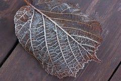blad och frost Arkivbilder