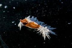 Blad och frost på svart is Royaltyfria Bilder