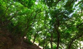 Blad och träd som isoleras på vit bakgrund fotografering för bildbyråer