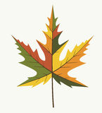 Blad olika Autumn Color Arkivbilder