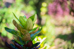 blad, onduidelijk beeld, tuin, park Stock Foto's