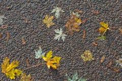 Blad op asfalt in de herfst Stock Afbeeldingen