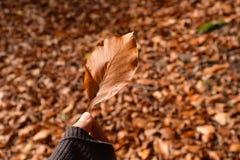 Blad op bladachtergrond die ter beschikking wordt gehouden stock afbeeldingen