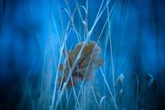 Blad op Blauw Stock Afbeeldingen