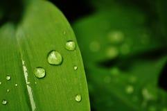 Blad op een groene achtergrond met waterdalingen Royalty-vrije Stock Afbeeldingen