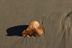 Blad op een zandig strand wordt gewassen dat Royalty-vrije Stock Afbeelding