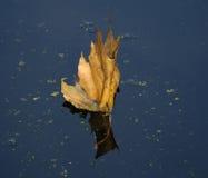 Blad op rivier Stock Foto's