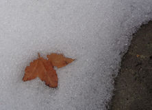 Blad op Smeltende Sneeuw Stock Foto's