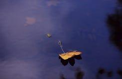 Blad op water Stock Foto's