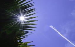 Blad, sol och himmel Royaltyfri Fotografi