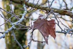 Blad som täckas i frost på en kall vintermorgon Royaltyfri Foto