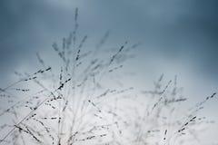 blad torkar gräs arkivfoton