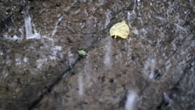 Blad under regncloseupen lager videofilmer