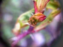 Blad van een bloem Royalty-vrije Stock Afbeelding