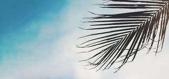 Blad van palm met hemelachtergrond Stock Afbeeldingen