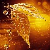 Blad van waterplons die wordt gemaakt Schoon en helder ontwerp Royalty-vrije Stock Fotografie