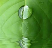 Blad in water Royalty-vrije Stock Fotografie