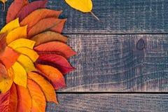 Bladbakgrund på en trätabell Royaltyfria Foton