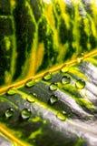 Bladbloem met waterdruppeltjes royalty-vrije stock fotografie