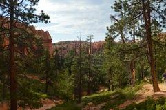 Bladbossen van Pijnbomen en Sparren in Bryce Canyon Formations Of Hodes geology royalty-vrije stock foto's