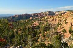 Bladbossen van Pijnbomen en Sparren in Bryce Canyon Formations Of Hodes geology Reis nave royalty-vrije stock afbeeldingen