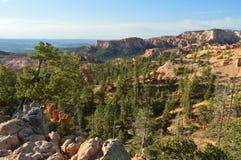Bladbossen van Pijnbomen en Sparren in Bryce Canyon Formations Of Hodes geology Reis nave royalty-vrije stock afbeelding