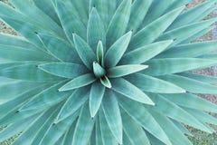 Bladcycadsgräsplan arkivbilder
