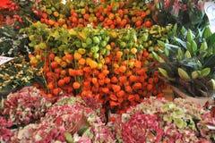 Bladder cherry at Columbia road flower market London , Uk. Columbia road flower market London , Uk .Physalis alkekengi flowers on sale Royalty Free Stock Image