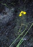 Bladderwort Stock Image