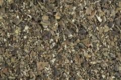 Bladderwrack seaweed. Background of dried bladderwrack seaweed (Fucus vesiculosus) rich in iodine. Bladderwrack is a brown seaweed harvested from cool ocean stock image