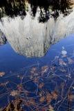 Bladdetalj, Merced flod, Yosemite Royaltyfri Fotografi