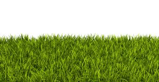 Blade of Fresh Green Grass Isolated on White Background. Fresh Green Blade of Grass - Isolated On White Background - 3D Illustration stock illustration