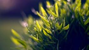 Blade, Of, Grass,  Stock Photos
