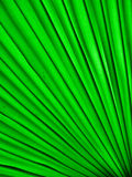 Blade of grass Stock Image