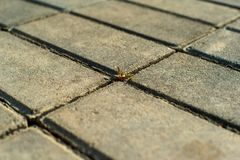 A blade of grass breaks through the paving slabs royalty free stock photos