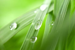 Blade of grass in details Stock Photo