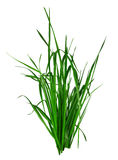 Blade of grass isolated on white Stock Photography