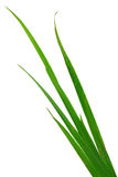 Blade of grass isolated on white background Stock Photography