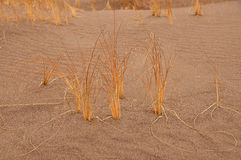 Blade of grass. In the sand Stock Photos