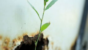 Blade of grass sprouted from a rusty hole in the back of a white car. Pump stock video footage