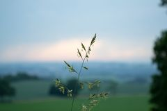 Blade of grass in the sunset Royalty Free Stock Photography