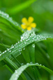 Blade of Grass and Water Droplet Stock Photography