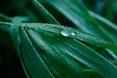 A Blade of Grass and Water Droplets. Closeup Stock Photography