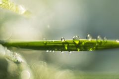 A blade of grass with waterdrops. Bokeh ndew fresh grass morning sunny grassland light landscaping meadow sunlight line leaf perfect drops health color natural Royalty Free Stock Photo