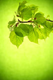 Bladeren. Royalty-vrije Stock Afbeelding