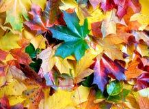 Bladeren Royalty-vrije Stock Foto's