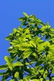 Bladeren royalty-vrije stock afbeelding