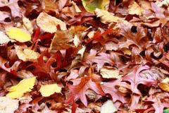 Bladeren stock afbeeldingen